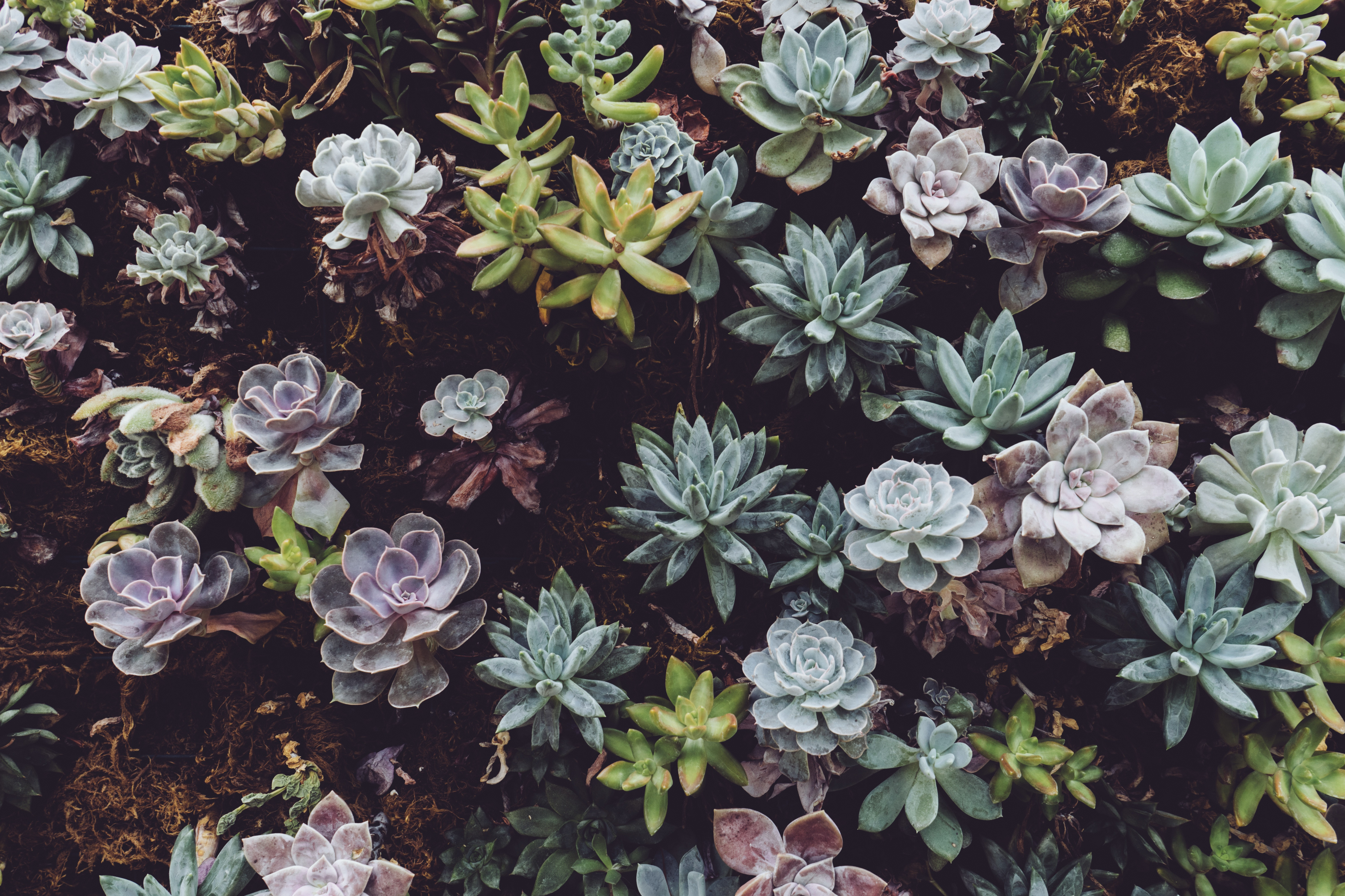 5 Ways To Incorporate Succulents Into Your Wedding Floral Design